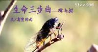 生命三步曲《蝉与树》